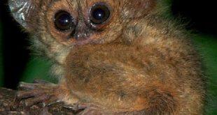 صور اغرب المعلومات عن الحيوانات , اعرف اكتر عن عالم الحيوان