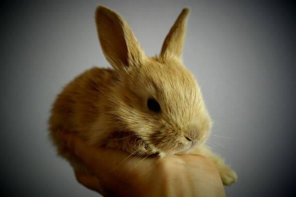 صورة الارنب في الحلم , حلمت اني شوفت ارنب