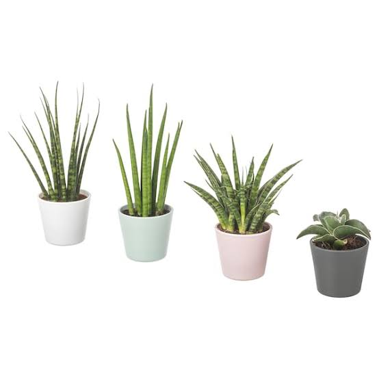 صورة اسم نبات بحرف ن , امثله عن اسماء نبات بحرف ن