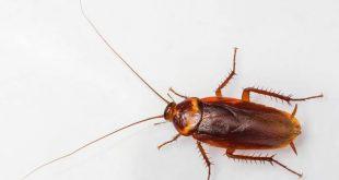 صورة كيفية القضاء علي الصراصير داخل الثلاجة , كيفيه التخلص من الصراصير