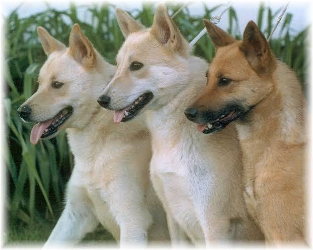 صورة صور انواع الكلاب , الي من يريد شراء كلب