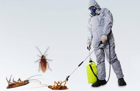 صورة شركة مكافحة حشرات بجدة , ما افضل شركه مكافحه حشرات في جده