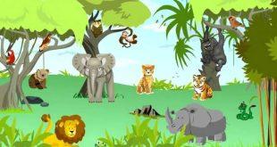 صورة اماكن عيش الحيوانات , اين يعيش الحيوانات