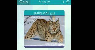 صورة بين القط والنمر , حل اللغز ما هو الحيوان بين القط و النمر