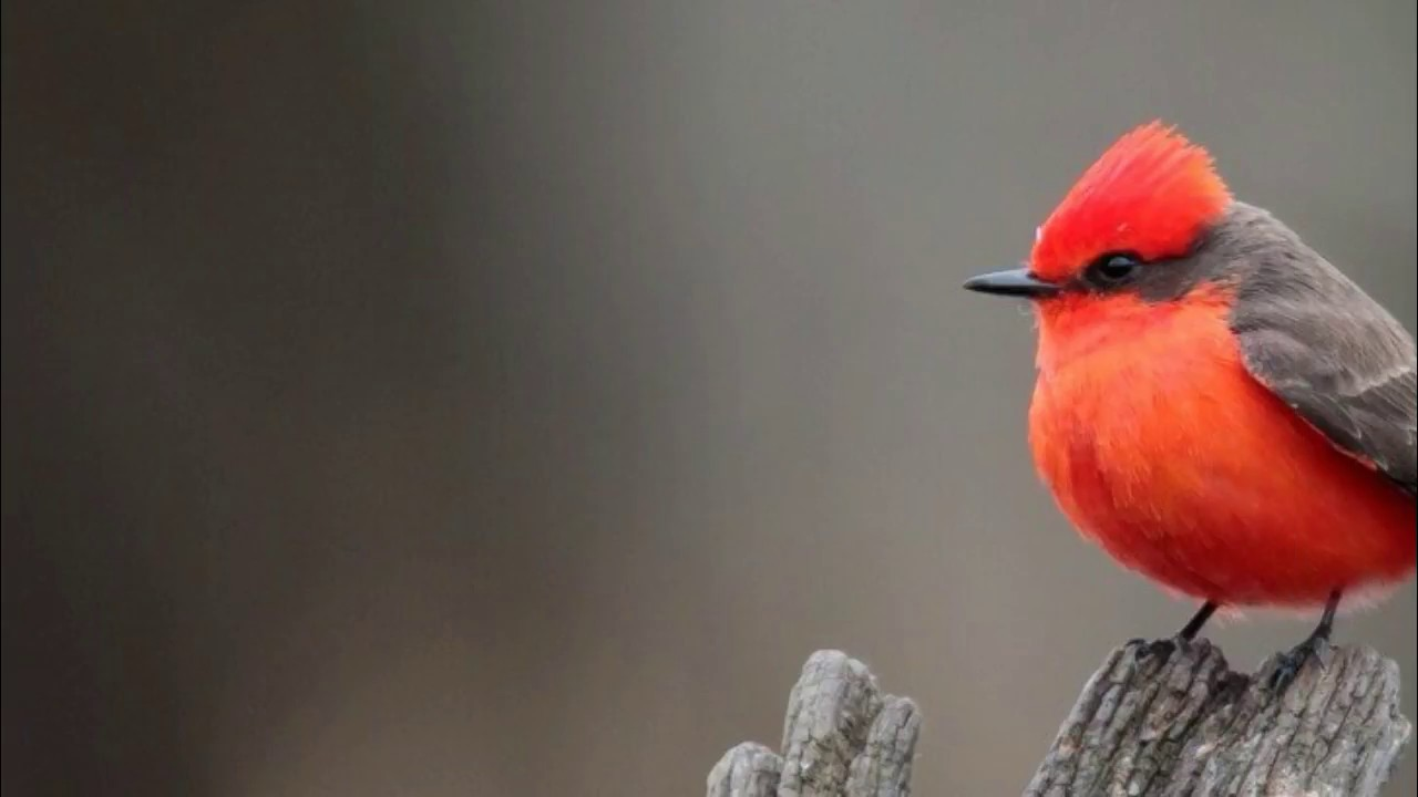 صورة تفسير حلم الطيور , حلمت اني شايف طيور