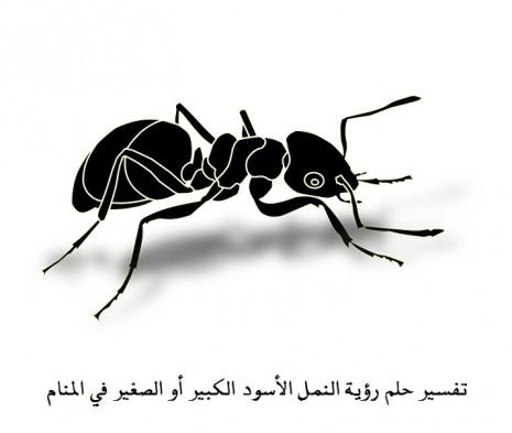 صورة رؤية النمل على الجسم في المنام , حلمت ان جسمي كله عليه نمل