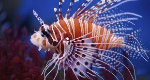 صورة اسماء الاسماك مع الصور , سبحان الله اشكال غريبة جدا