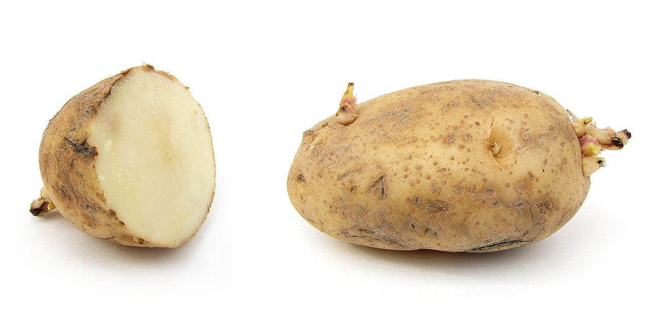 صورة كيفية زراعة البطاطس , افضل طريقة للحصول على بطاطس ممتازة