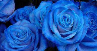 صورة تفسير حلم اللون الازرق , رايت كل شئ حولي ازرق