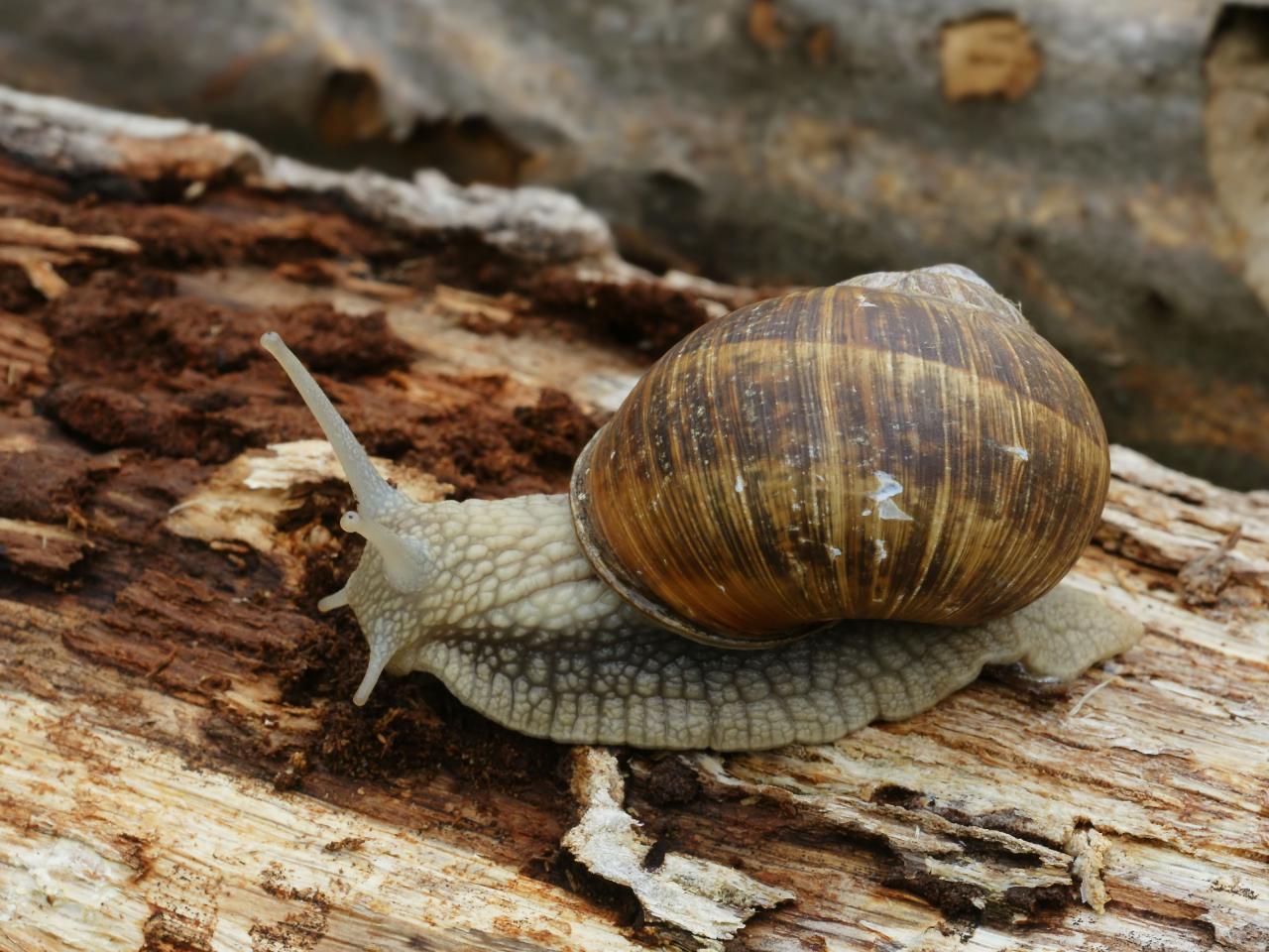 صورة عجائب وغرائب عالم الحيوان , معلومات ستتعرف عليها لاول مرة