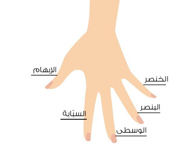 صورة الابهام في المنام, تفسير بن سيرين لرؤية الاصابع