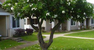 صورة انواع الاشجار واسمائها وصورها, تعرف على الاشجار وفوائدها