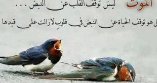 صورة اجمل الكلمات عن الحياة, عبارات وحكم رائعة للحياه