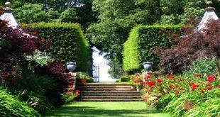 البستان الاخضر في المنام